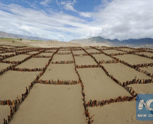Photo taken on July 16, 2012 shows the grass square used to fix sand dunes on the north bank of the Yarlung Zangbo River, southwest China's Tibet Autonomous Region. (Xinhua File Photo by Purbu Zhaxi)